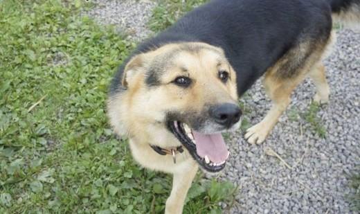 Towarzyski  łagodny psiak szuka domu!   Kundelki cała Polska