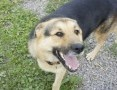 Towarzyski, łagodny psiak szuka domu!,  Kundelki cała Polska