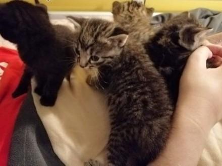 Małe kotki    lubuskie Gorzów Wielkopolski