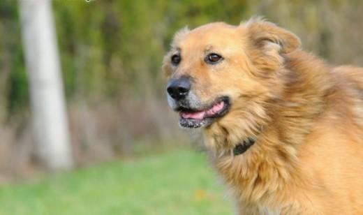 Poznaj  pokochaj Teddiego- wyjątkowego psa   świętokrzyskie Kielce