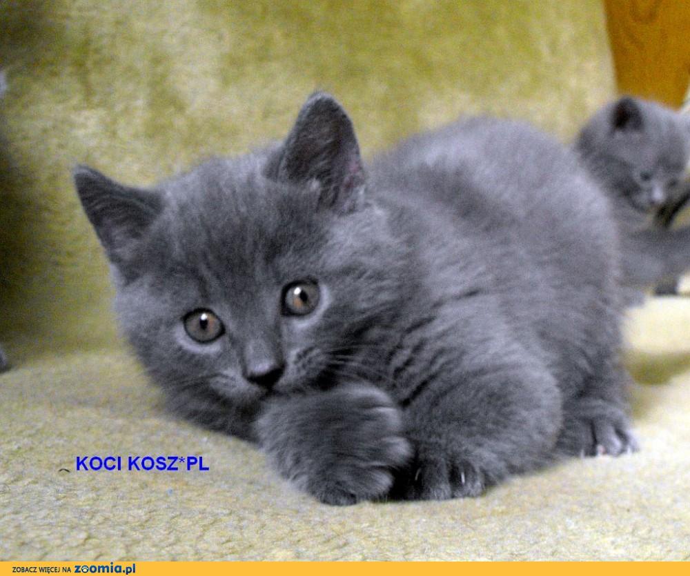 https://koty-kartuskie.pl KOCI KOSZ*PL