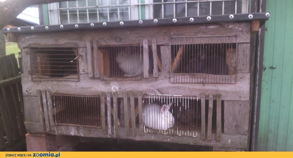 Sprzedam 5 komorową klatkę dla królików;)
