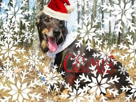 Święty Mikołaju! Czy spełnisz marzenie Gacusia?