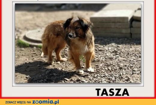TASZA,łagodna,nieśmiała sunia po przejściach do domu z ogrodem,sterylizowana TASZA.,  mazowieckie Warszawa