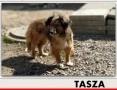 'TASZA,łagodna,nieśmiała sunia po przejściach do domu z ogrodem,sterylizowana TASZA.,  mazowieckie Warszawa