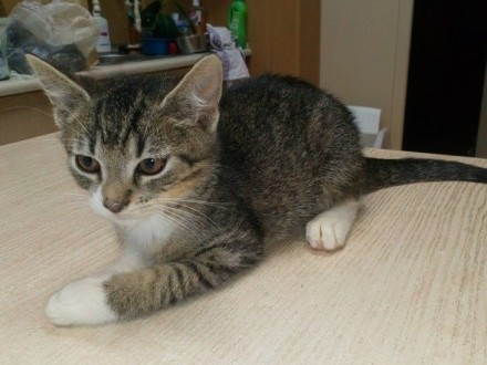 Mały kociak Dyzio szuka domu