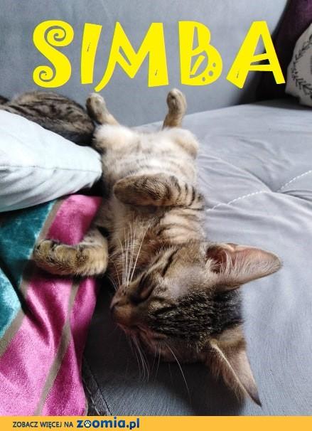Kociaki: Julian i Simba szukają domów
