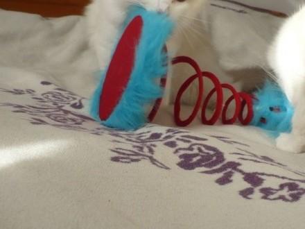 Po Chionie wyjątkowe  kochające i oddane kocięta ragdoll z maleńkiej hodowli Koty Na Medal