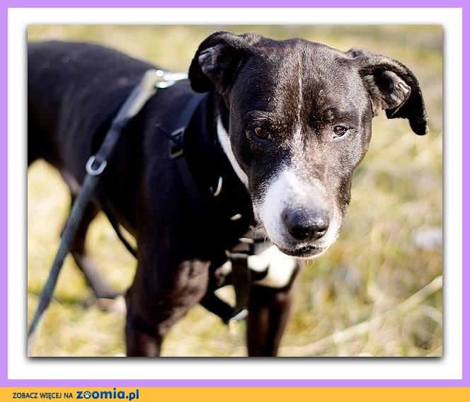 Średnio aktywny,łagodny,towarzyski,kontaktowy,średni pies BARY_Adopcja