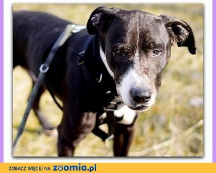 Średnio aktywny łagodny towarzyski kontaktowy średni pies BARY_Adopcja