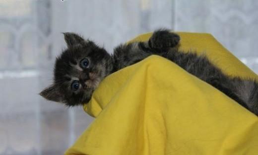 Trzy maluszki KOTECZKI szukają pilnie super domów!   Koty pospolite cała Polska