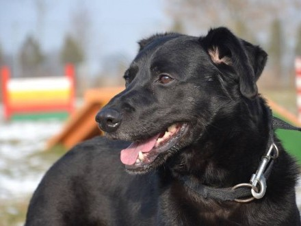 Macho - temperamentny psiak szuka domu