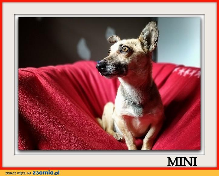 Mała 6 kg,aktywna,wesoła,towarzyska,sterylizowana suczka MINI_Adopcja_