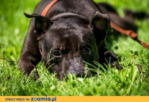 Pokochaj czarnego psa ! NEMO też marzenia ma !,  świętokrzyskie Kielce