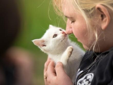 Maleńka koteczka trikolorka szuka niewychodzącego domu!