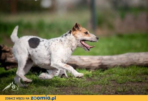 ZYZIA - radocha na łapach i mordka kudłata,  śląskie Katowice