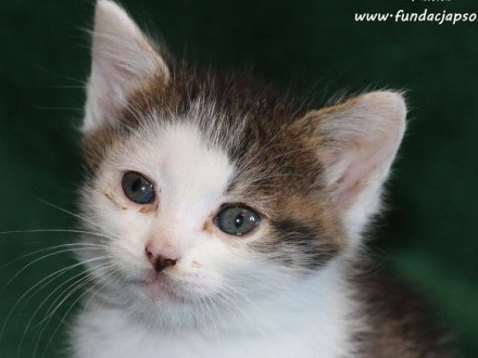 Fanka - spragniona miłości koteczka