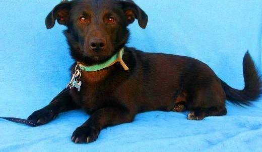 BĄBEL - piękny  1 5 roczny 8 kg psiak szuka domu   mazowieckie Warszawa