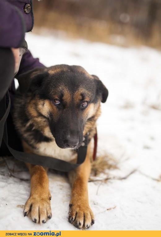 Jurand - cudny, duży pies szuka dobrego domu,  łódzkie Łódź