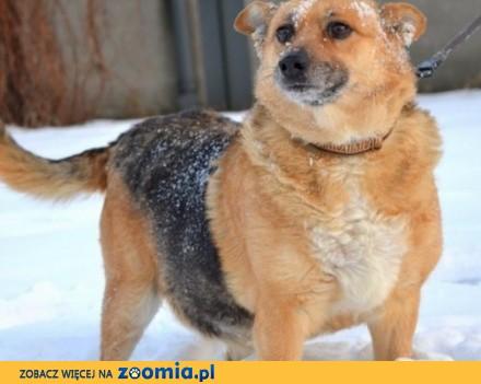 SABA – ideał psa szuka domu!!!