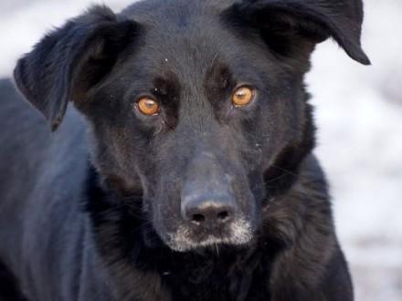 Bary uroczy psiak szuka domu   Kundelki cała Polska
