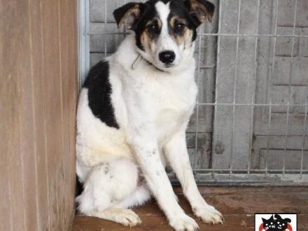 Maniu - wyjątkowy  piękny pies szuka domu