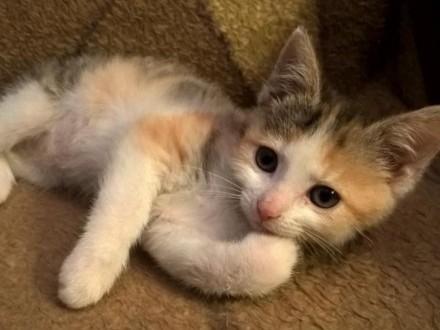 Mała koteczka Lady szuka domu