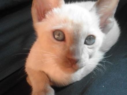 kot  kotka   kocięta  kociaki   warmińsko-mazurskie Lidzbark