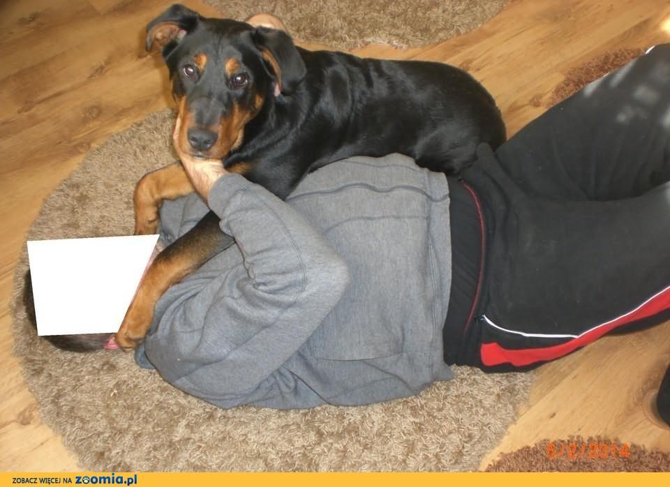 oddam rocznego psa w dobre ręce