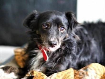 BLACKY - delikatny i wrażliwy  kochany psiak; do adopcji   małopolskie Kraków