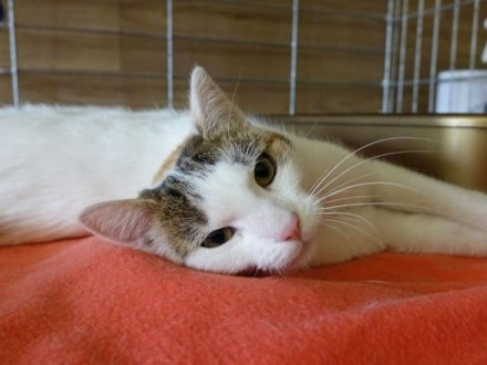 Karolcia - kotka w kropki