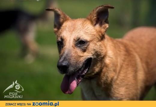 LORI-najpiękniejsza świata psia! No i taka mądra!,  małopolskie Kraków