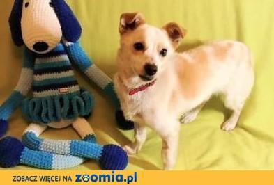 RAMBO - wrażliwy, malutki, 6 kg psiak szuka domu