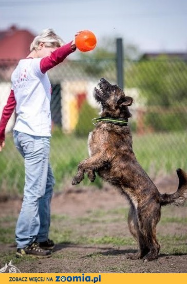Londi psica to wspaniała, do kochania doskonała !