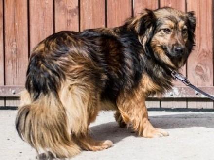 TOFIK i KARMELEK - roczne psiaki szukają domów   mazowieckie Warszawa