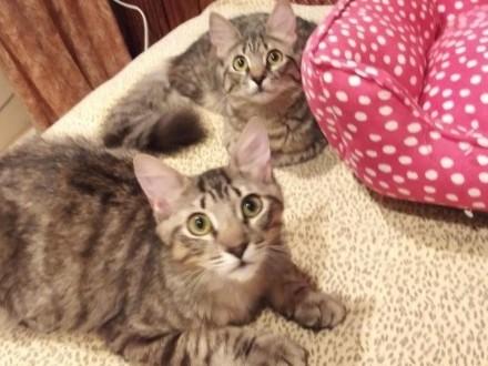 koty płci męskiej i żeńskiej