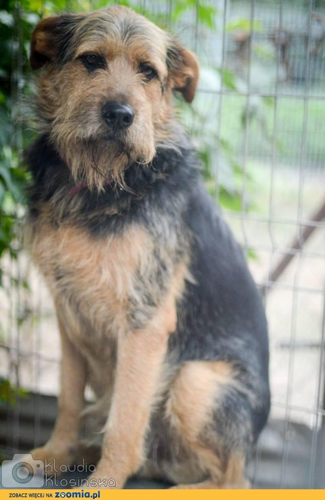Wezyr, przepiękny pies szuka odpowiedzialnego domu!