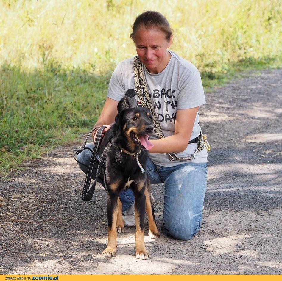 Dżeki-młody, energiczny pies szuka domu!,  śląskie Częstochowa