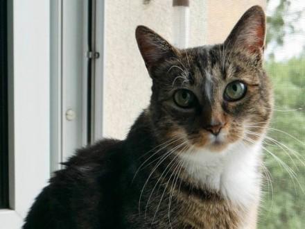 Dorosła kotka Mundzia szuka domu