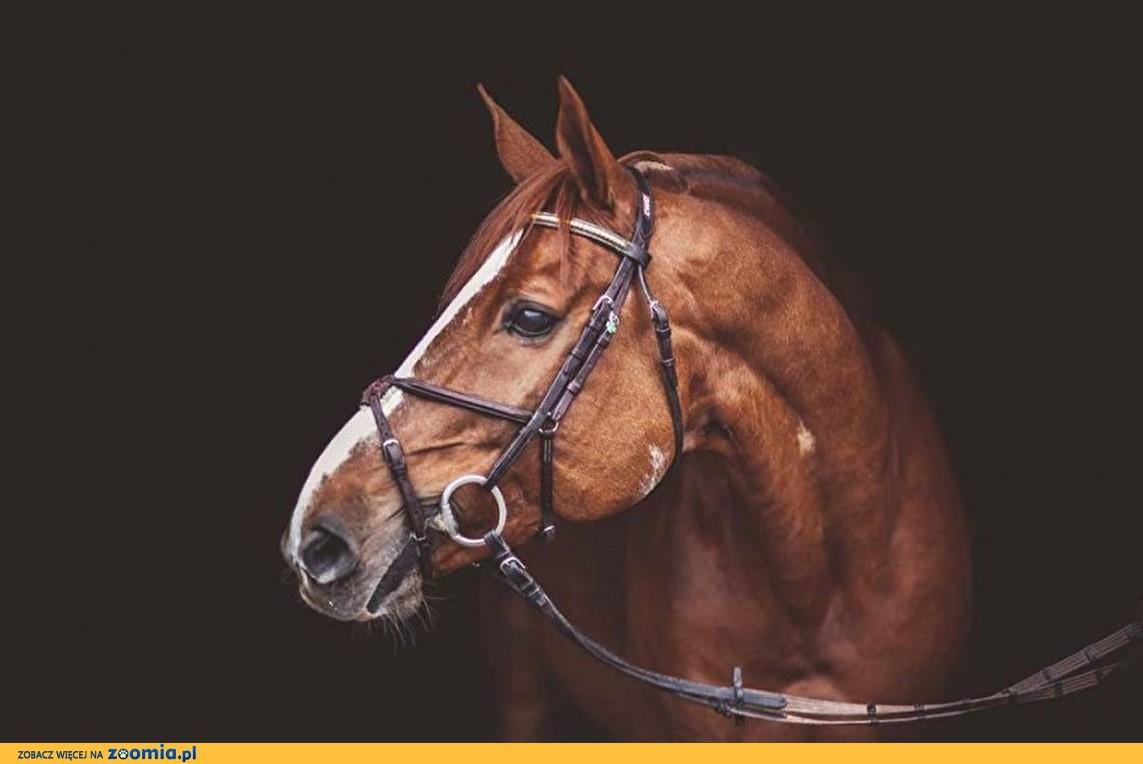 Buy lovely pony