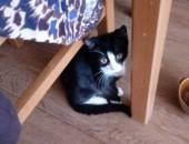 Koteczka Fela szuka domu