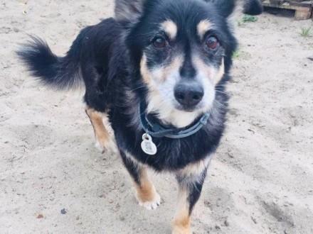 Wysoka nagroda za odnalezienie psa
