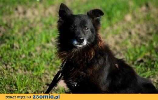 Ciapek, niewielki kudłatek, wesoły i przyjazny psiak ADOPCJA,  Kundelki cała Polska