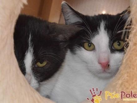 PYŁEK-śliczny  trochę nieśmiały  mały kotek-3 5 miesiąca-szukamy DOMU