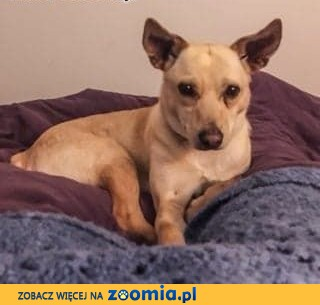 SARA - 1,5 roczna, delikatna, kochana sunia szuka domu!,  mazowieckie Warszawa