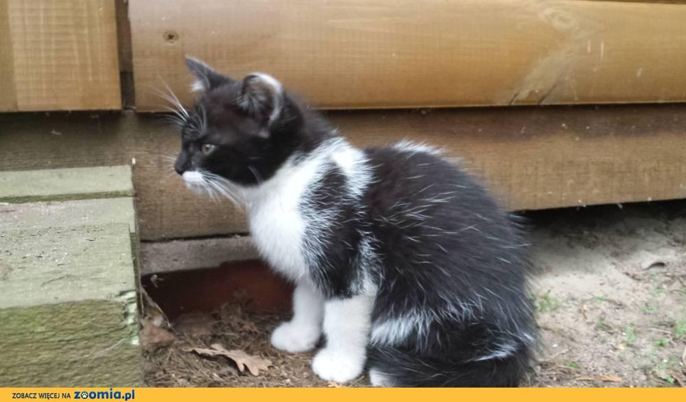 Mała kotka szuka domu