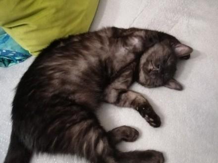 ZAGINĄŁ młody czarny kot
