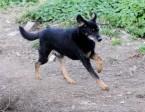 Władzio cudowny pies,  Kundelki cała Polska