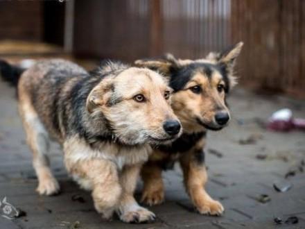 Gucio i Chałka - psi przyjaciele czekają na Ciebie!   mazowieckie Warszawa
