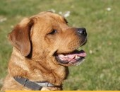 Chucky, psi ideał, pozytywny, domowy, dobrze wychowany